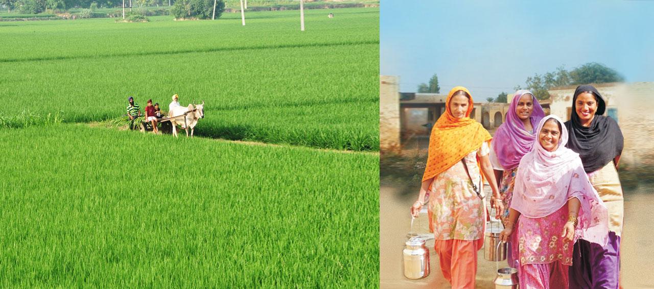 Baani Milk in village
